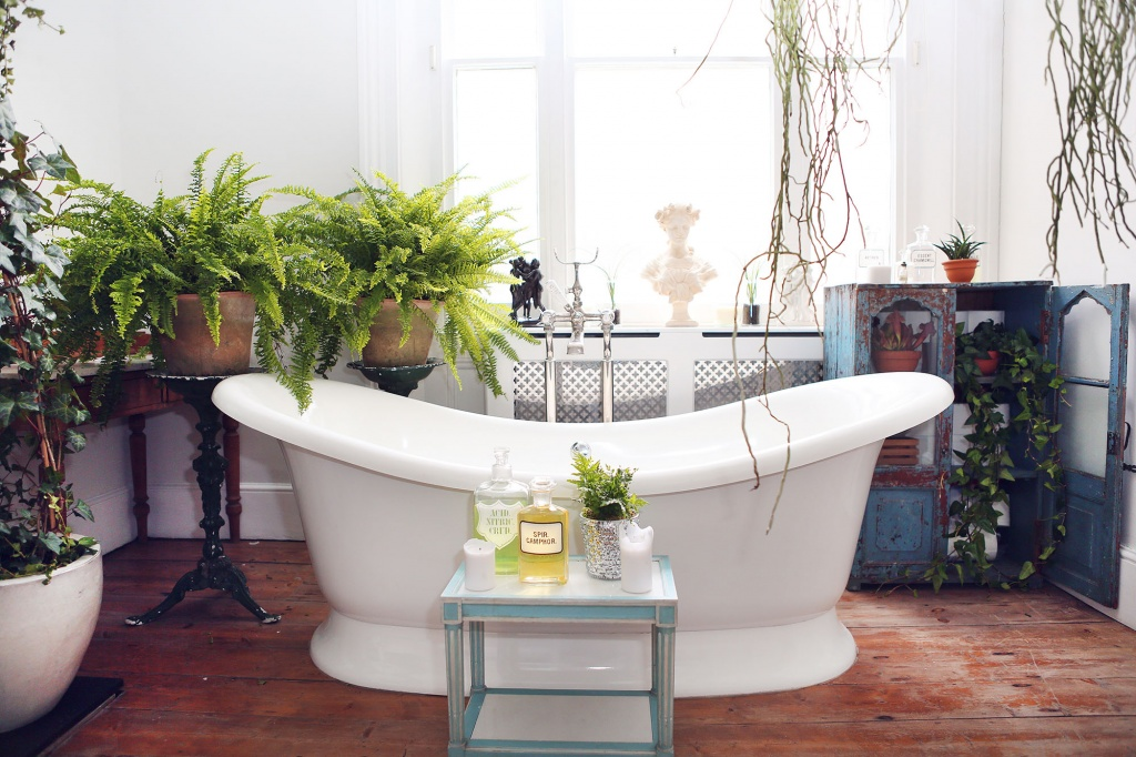 5 Indoor Plants That You Should Consider Keeping in Your Bathroom